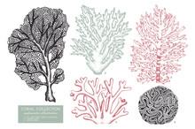 Vector Collection Of Hand Drawn Reef Corals Sketch.Vintage Set Underwater Natural Elements. Vintage Sealife Illustration On White Background