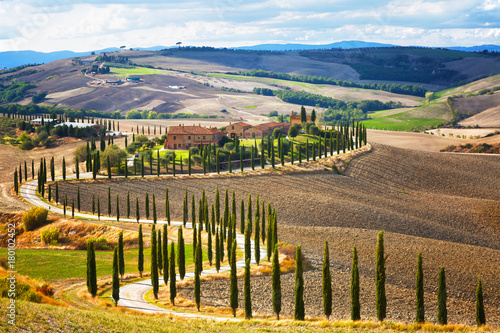 Poster Toscane Landscape of hills, country road, cypresses trees and rural houses,Tuscany , rural Italy