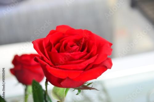 Plakat Różany bukiet dla mojej miłości
