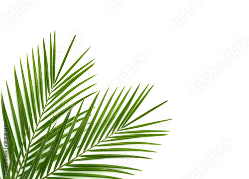 Canvas Prints Palm tree Tropical palm leaf on a white background