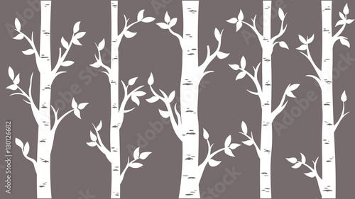 Birch Grove background Canvas Print