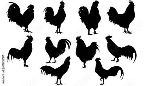 Photo Rooster Silhouette Vector Graphics