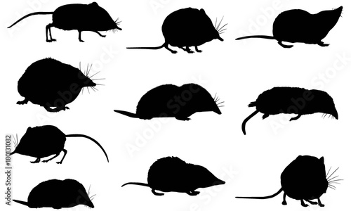 Fotografie, Obraz  Shrew Silhouette Vector Graphics