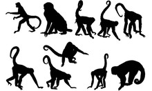 Spider Monkey Silhouette Vector Graphics