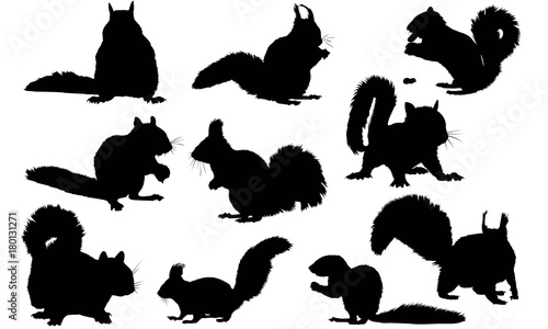 Squirrel Silhouette Vector Graphics Canvas Print