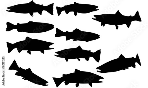 Obraz na plátně Steelhead trout Silhouette Vector Graphics