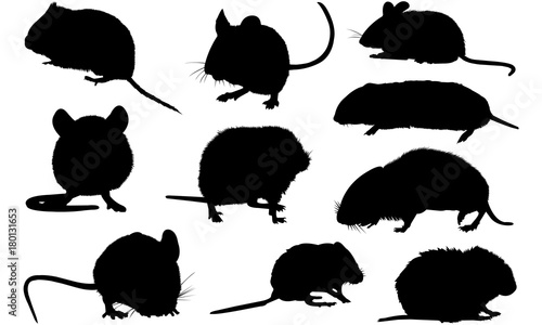 Fotomural  Vole Silhouette Vector Graphics