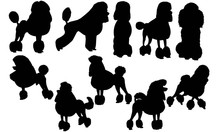 Poodle Dog Silhouette Vector G...
