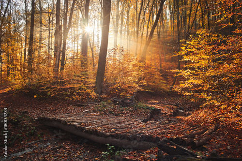 Foto op Canvas Herfst Wood bridge in autumn forest with a foggy sunrise