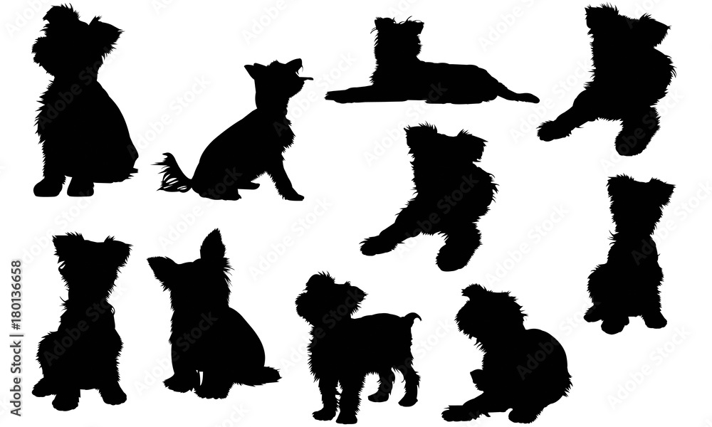 Fototapeta Yorkshire Terrier Dog Silhouette Vector Graphics
