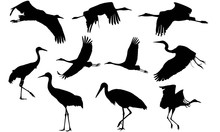 Whooping Crane Silhouette Vector Graphics