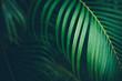 Leinwandbild Motiv Palm leaf background.