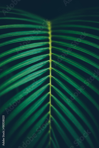 Palm leaf background.