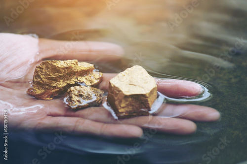 Fotografia, Obraz  Gold in its origin as gold nuggets in the mine is in the hands of men selective focus