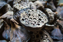 Dry Old  Lotus Pods With Seeds...