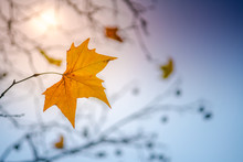Last Leaf Of Autumn