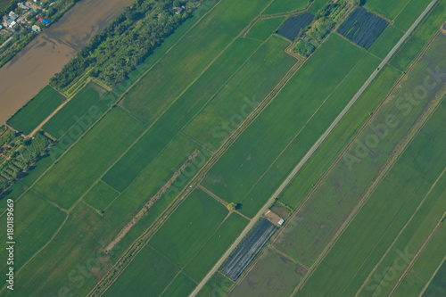 Keuken foto achterwand Olijf Aerial view from flying drone of Field rice with landscape green pattern nature background / top view field rice