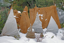 Shrubs Protection From Frost I...