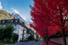 Erables En Automne à Chamonix