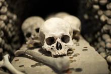 Agglomeration Of Skulls And Bones