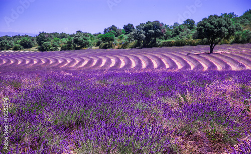 Foto op Aluminium Snoeien Lavender fields in France