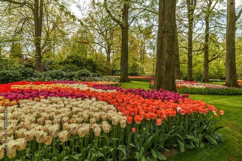 Photo  Blooming flowers in Keukenhof park