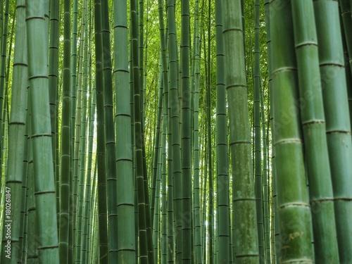 Foto op Plexiglas Bamboe Bambus Hintergrund Wald