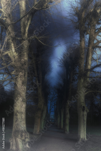 A mystical way in the creepy forest - Buy this stock photo