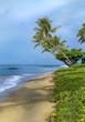 Kaanapali Morning Palm