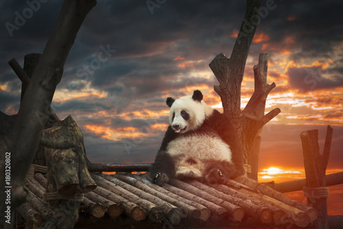Foto op Canvas Panda Big panda