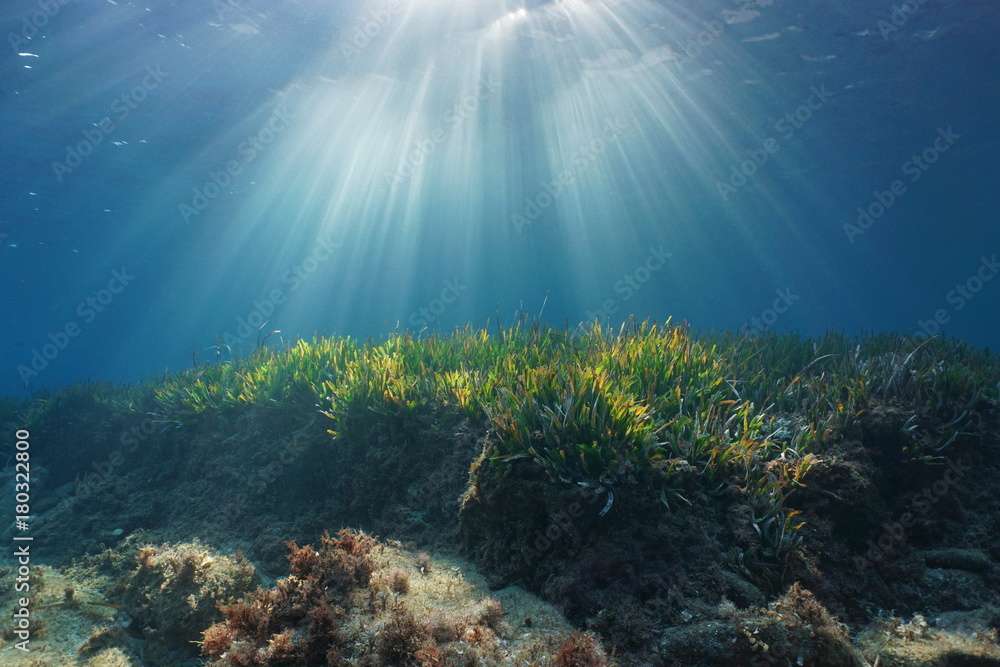 Fototapety, obrazy: Natural sunbeams underwater through water surface in the Mediterranean sea on a seabed with neptune grass, Catalonia, Roses, Costa Brava, Spain