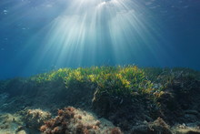 Natural Sunbeams Underwater Th...