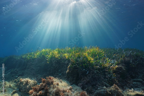 Natural sunbeams underwater through water surface in the Mediterranean sea on a seabed with neptune grass, Catalonia, Roses, Costa Brava, Spain
