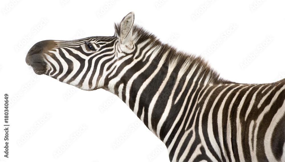 Fototapety, obrazy: Zebra (4 years)