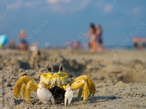Ghost Crab on Crowded Beach, Day Poster