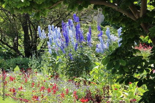Obraz na płótnie blauer Rittersporn im Botanischen Garten München