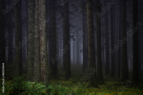 Papiers peints Forets Dark, misty forest in southern Germany at late autumn. Background, illustration concept.