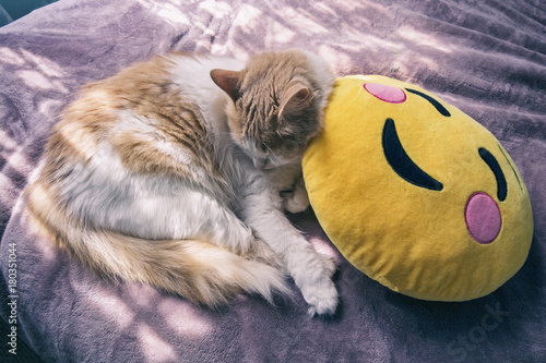 Obraz na plátně White and ginger / orange kitten sleeping on a yellow blushing emoji face pillow