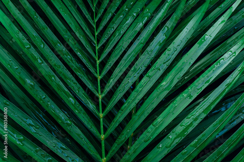 Poster  tropical palm foliage, greenery background