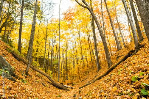 Foto op Canvas Herfst Beautiful autumn scene in forest