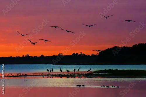 Poster Oranje eclat Arriving sandhill cranes