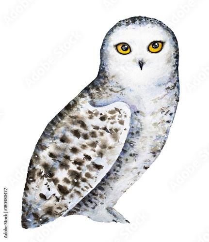 Keuken foto achterwand Uilen cartoon Snowy polar owl portrait. Full length body, standing. Big round yellow orange eyes, black beak, white plumage with brown dots and spots. Hand drawn watercolor illustration isolated, white background.
