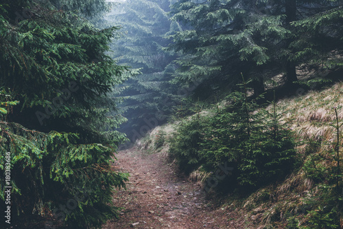Poster Grijze traf. Misty forest on mountain slopes in sunlight.