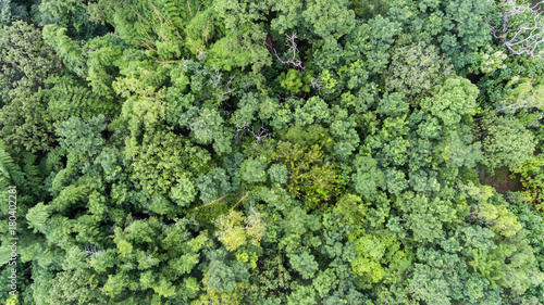 Cadres-photo bureau Olive Aerial view of the forest.Thailand