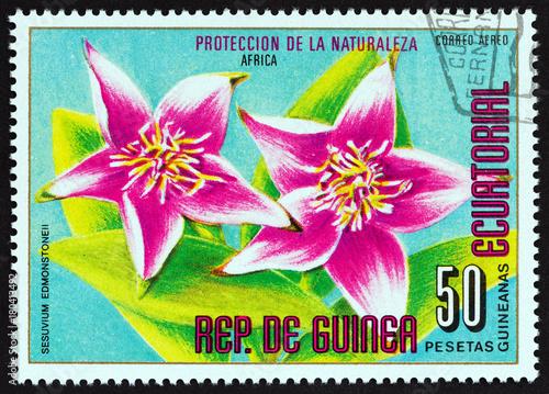 Fotografía  Sesuvium edmonstonei (Equatorial Guinea 1976)