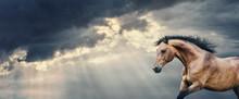 Bay Horse Running At Beautiful...