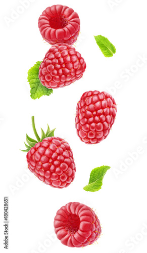 Isolated berries floating in the air. Falling raspberry fruits with leaves isolated on white background with clipping path