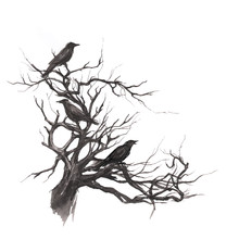 Monochrome Hand Drawn Watercolor Ink Illustration With Tree Branches, Twigs And Black Ravens. Crows On The Old Dead Tree. Scary Halloween Background.