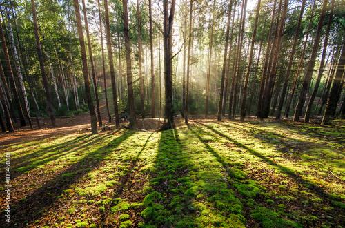 Fototapeten Wald Wald im Gegenlicht