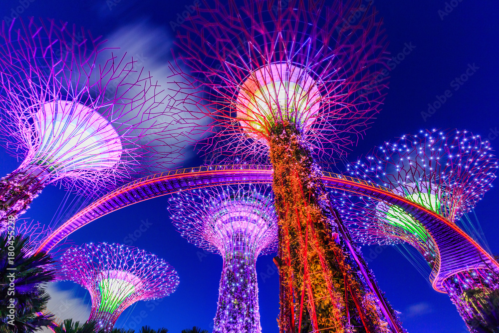 Fototapety, obrazy: Singapore City, Singapore. Supertree Grove at the Gradens by the Bay.